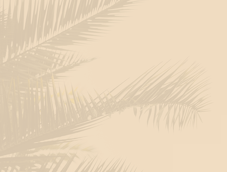 Palm tree leaf background graphic