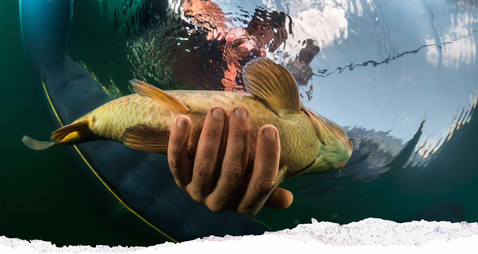Hand grabbing fish underwater view